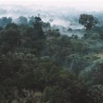 巴西原住民「改裝舊手機」護雨林,佈下「監聽網」讓盜伐者無所遁形!