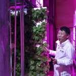 地球越來越熱,糧食作物還種得活嗎?「廢棄高速公路隧道」成解方,南韓打造直立型智慧溫室