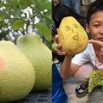 柚子沒噴過半滴農藥,卻慘在收成前被野豬踩爛!有機柚農不惜重本義賣,為弱勢童圓夢