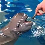 再發現保育類動物江豚屍體 這已是馬祖今年第13隻
