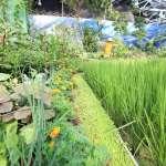 花博外埔園區智農館 逾千種珍稀植物