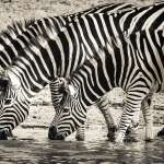人類對地球依舊予取予求!全球動物減少6成、瀕臨滅亡物種增多⋯他警告:人類應開始「這麼做」!