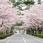 為何日本笠間市能脫離醫療複檢折磨?大數據與雲端技術整合,成功治療一座城市