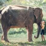 為何大象不太會得癌症?科學家公布驚人發現:原來牠們有這種「神奇基因」,超級抗癌!