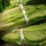 最近要小心美加蘿蔓生菜!食藥急發公告「勿生食」,醫師:毒性強、恐致敗血症危命