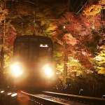 叡山電鐵自黑暗中閃現 列車穿越紅葉隧道引歡聲