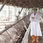 探討循環養豬 創造「三零」經營環境