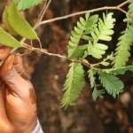 2018回顧》植物界的十大新發現:荒島上的食蟲者、可能治癌的花、雲霧森林中的鮮花……