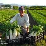 如果這塊地適合種蘿蔔,那就種吧!不施肥的自然農法,讓土壤更健康