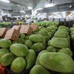 農委會欲祭「收購打果汁賣」救西瓜價 民眾黨:紓困不是統統榨成汁