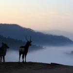 奈良鹿群漫步雲海 如夢似幻的若草山景緻