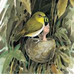 編織匠的材料學:《鳥巢》選摘(1)