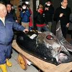 台東版老人與海?市價15萬的黑鮪魚拉上船只剩魚頭...漁民下場超悲慘