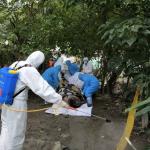 檢驗報告出爐!台北街頭的麝香豬屍未感染非洲豬瘟