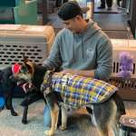 MLB》陳偉殷帶兩隻流浪狗赴美,全力備戰新球季