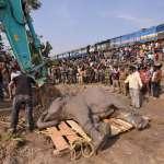 大片棲息地流失、象群被迫進人類地盤,不是殺人、就是被殺…印度「人象爭地」釀無數悲劇