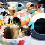 傳統和紙製成貓屋人氣夯 島根縣工坊創新商品化