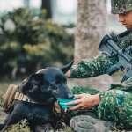 9月9日是「台灣狗狗節」 特戰犬、憲兵軍犬一次看