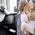 2年輕人百貨買下獅子野放,多年後「重逢畫面」感動數萬人!揭60年代轟動全球的人獅情緣