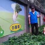 新北里長打造季節蔬菜 一年四季常盛
