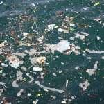 超過99%海洋塑膠垃圾都下落不明!科學家破解汙染行蹤,竟連最深海溝的蝦都有塑膠微粒