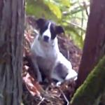 「沒有牠恐怕永遠找不到人」 愛犬寸步不離主人遺體 吠聲助警方找到失蹤登山男