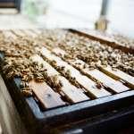 別再信不純砍頭!蜂蜜產品標示新規將上路,一圖帶你看懂如何辨認純度