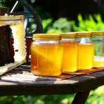 買蜂蜜不再擔驚受怕!首批14戶蜂農加入「產銷履歷計劃」,不只驗蜂蜜,連花粉都要驗