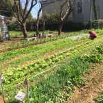 都市農夫體驗 中市「環保農園」開放報名