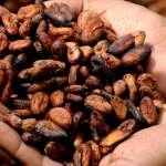 甜美滋味的不堪真相──你愛吃的巧克力,可能來自12歲童工之手《華郵》深入西非血汗可可農場