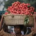 神秘怪病捲土重來!印度東北部上百名幼童急性腦炎猝死 研究人員建議:別空腹大啖荔枝!