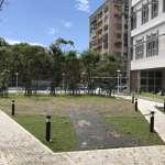 建築物與老樹共存 樹林藝文大樓保留老樹綠色活古蹟