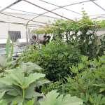 蚯蚓蔬菜共生 居家農園再進化