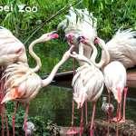 夏季限定!台北動物園「這些天」越晚越好玩,錯過等明年