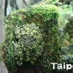你猜得出圖中有幾隻蛙嗎?動物園成功繁殖「偽裝高手」苔蘚蛙,完美融入熱帶雨林環境