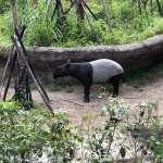 動物外交》合作交換取代花錢購買 台北動物園參與國際保育成果受肯定