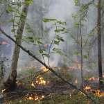 為何巴黎聖母院失火大家群情激憤、捐出大筆金錢,地球在「燃燒」你卻什麼都不做?