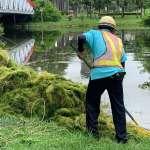 雨後公園草不完生態豐富 工務局:每月定期派員撈除