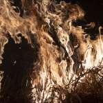 野火吞噬「地球之肺」百萬物種危在旦夕!迫於輿論壓力,巴西總統博索納羅下令:軍隊搶救亞馬遜雨林