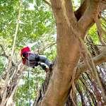 爬樹竟有意想不到的好處!提升記憶、訓練平衡…5大優點報你知