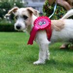 領養代替購買!15周小狗遭繁殖場丟棄 英國首相強森收養成為唐寧街「第一犬」