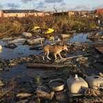 對抗氣候變遷要付出多少代價?潘基文、比爾蓋茲背書:只要投資這5個領域,有望創造7兆美元收益!