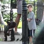 一個六歲小孩、一隻貓、一隻狗同時在都市走失,誰會先獲救?社會實驗的結果令人瞠目結舌