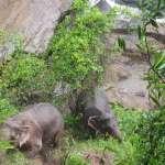 泰國大象「滅門」慘案!小象受困「地獄谷」瀑布,5頭大象跳下捨身相救,全都不幸溺斃