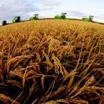 世界糧食日解讀中國糧食豐收「密碼」