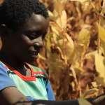 你抽的不是菸,是馬拉威孩子被犧牲的童年……童工全家年薪不到8000元,英美菸草公司被控剝削第三世界佃農!