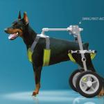 寵物也有高齡化問題!日本大學開發寵物輪椅,減輕「人狗老老照護」負擔