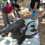 塑膠大國・環境浩劫》內褲、塑膠袋、橡膠手套都被他吃下肚……胃裡塞滿7公斤垃圾 泰國野鹿葬身國家公園