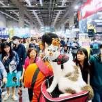 台灣養貓熱!貓型人社會來臨,反映人們「宅、懶、獨」特質?