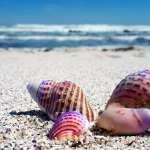 貝殼被沖到沙灘還有機會回到海中,若我們撿回家等於判它死刑!她道出我們對海洋的無知